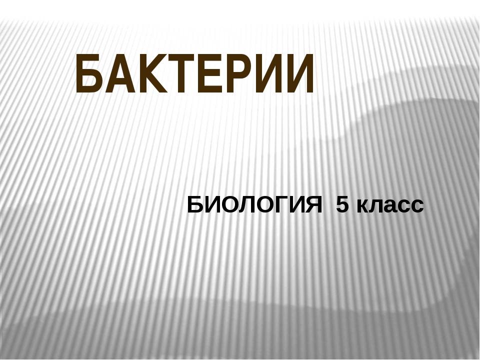 БАКТЕРИИ БИОЛОГИЯ 5 класс