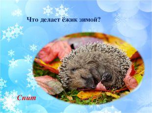 Что делает ёжик зимой? Спит