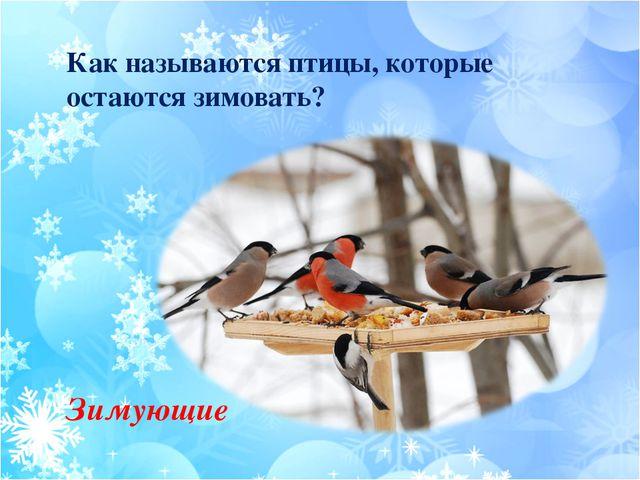 Как называются птицы, которые остаются зимовать? Зимующие