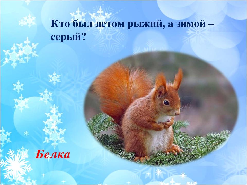 Кто был летом рыжий, а зимой – серый? Белка