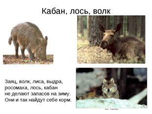 Кабан, лось, волк Заяц, волк, лиса, выдра, росомаха, лось, кабан не делают за