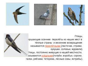 Птицы, совершающие осенние перелёты из наших мест в тёплые страны и весенни