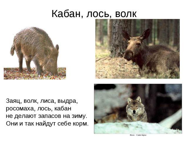 Кабан, лось, волк Заяц, волк, лиса, выдра, росомаха, лось, кабан не делают за...