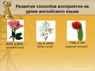 Развитие способов восприятия на уроке английского языка Rose is pink (розовая