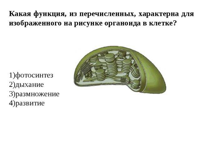 Какая функция, из перечисленных, характерна для изображенного на рисунке орга...