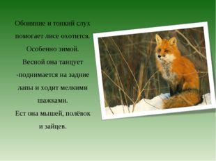 Обоняние и тонкий слух помогает лисе охотится. Особенно зимой. Весной она тан