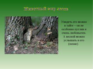 Увидеть его можно в тайге – он не особенно пуглив и очень любопытен. А весной