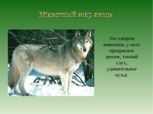 Это хищное животное, у него прекрасное зрение, тонкий слух, удивительное чутьё.