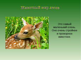 Это самый маленький олень. Оно очень стройное и проворное животное.