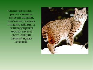 Как всякая кошка, рысь – хищница: питается мышами, полёвками, разными птицами