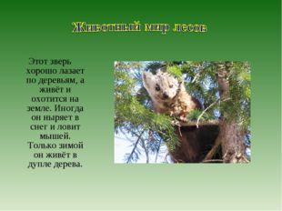 Этот зверь хорошо лазает по деревьям, а живёт и охотится на земле. Иногда он