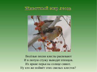 Весёлые песни клесты распевают И в лютую стужу выводят птенцов. Их яркие перь