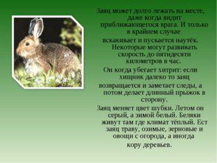 Заяц может долго лежать на месте, даже когда видит приближающегося врага. И т