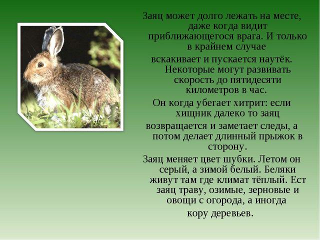 Заяц может долго лежать на месте, даже когда видит приближающегося врага. И т...
