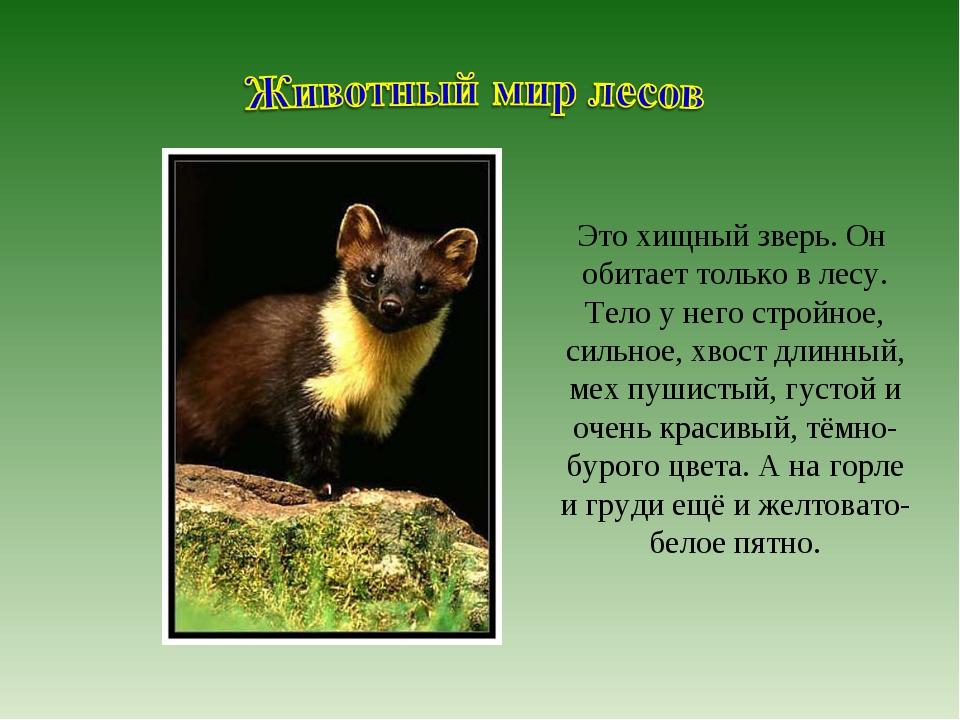 Это хищный зверь. Он обитает только в лесу. Тело у него стройное, сильное, хв...