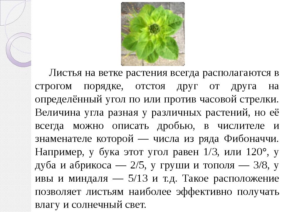 Листья на ветке растения всегда располагаются в строгом порядке, отстоя друг...