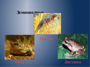 Земноводные Жаба Тритон Лягушка