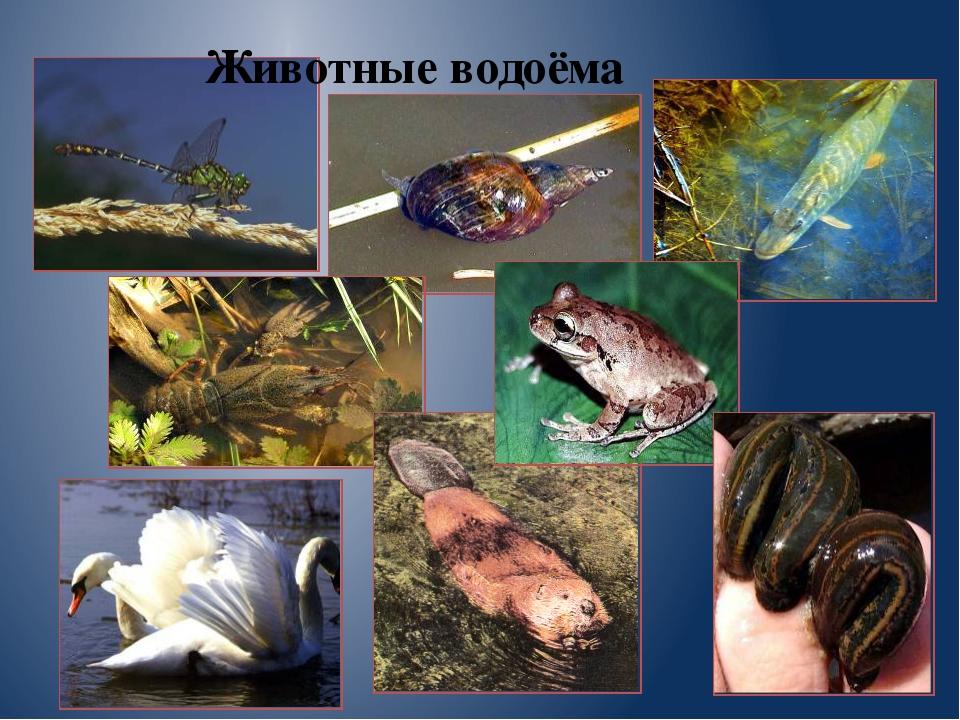 Животные водоёма