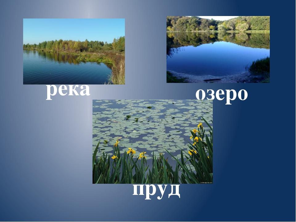 река пруд озеро