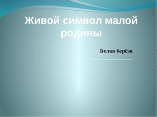 Живой символ малой родины Белая берёза МБОУ «Макеевская средняя общеобразоват