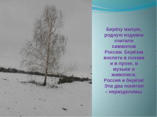 Берёзу милую, родную издавна считали символом России. Берёзка воспета в поэзи