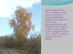 Красавицей русских лесов называют люди берёзу. Стройная, с тонкими длинными в