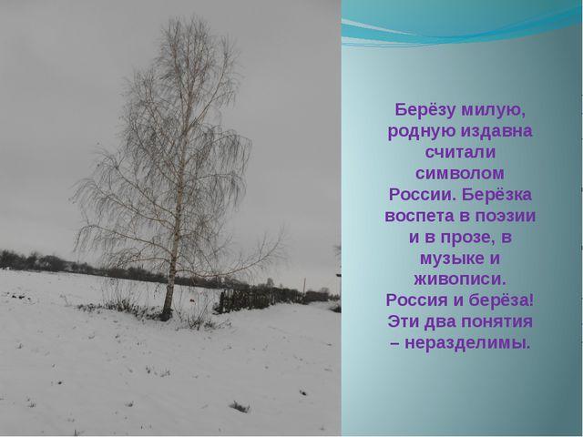 Берёзу милую, родную издавна считали символом России. Берёзка воспета в поэзи...