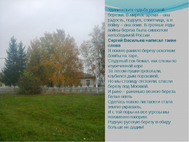Удивительна судьба русской березки. В мирное время – она радость, подруга, со...