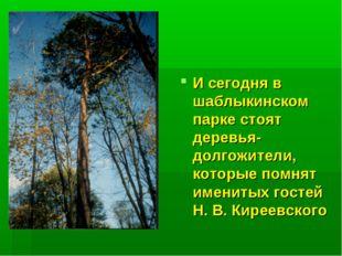 И сегодня в шаблыкинском парке стоят деревья-долгожители, которые помнят имен