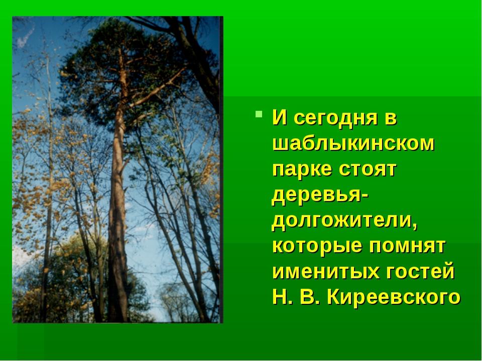 И сегодня в шаблыкинском парке стоят деревья-долгожители, которые помнят имен...