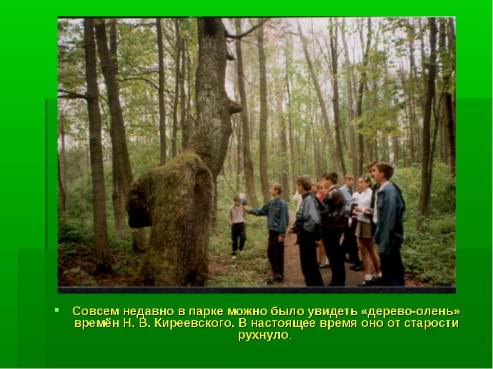 Совсем недавно в парке можно было увидеть «дерево-олень» времён Н. В. Киреевс...