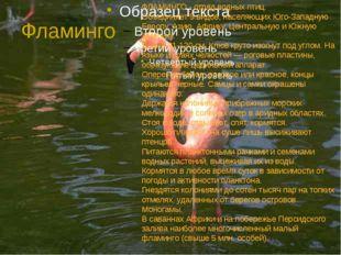 Фламинго ФЛАМИНГО - отряд водных птиц. Объединяет 5 видов, населяющих Юго-Зап