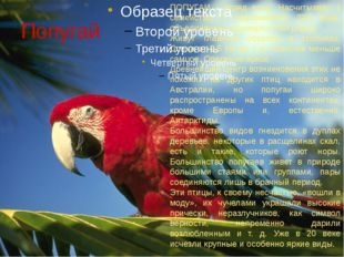 Попугай ПОПУГАИ - отряд птиц. Насчитывает 1 семейство, 7 подсемейств, 324 вид