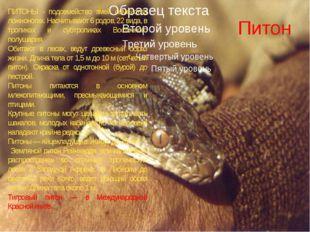 Питон ПИТОНЫ - подсемейство змей семейства ложноногих. Насчитывают 6 родов, 2