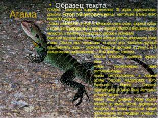 Агама АГАМЫ - семейство ящериц; включает 35 родов (круглоголовки, драконы, мо