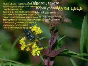 Муха цеце МУХА ЦЕЦЕ - представитель рода кровососущих двукрылых несекомых сем