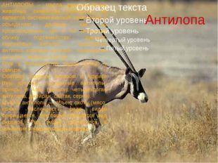 Антилопа АНТИЛОПЫ - группа парнокопытных животных семейства полорогих; не явл