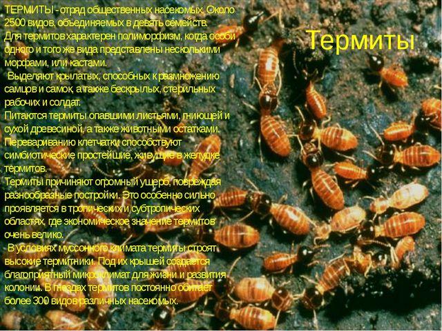 Термиты ТЕРМИТЫ - отряд общественных насекомых. Около 2500 видов, объединяемы...