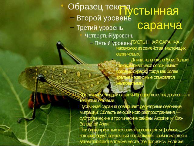 Пустынная саранча ПУСТЫННАЯ САРАНЧА - насекомое из семейства настоящих саранч...
