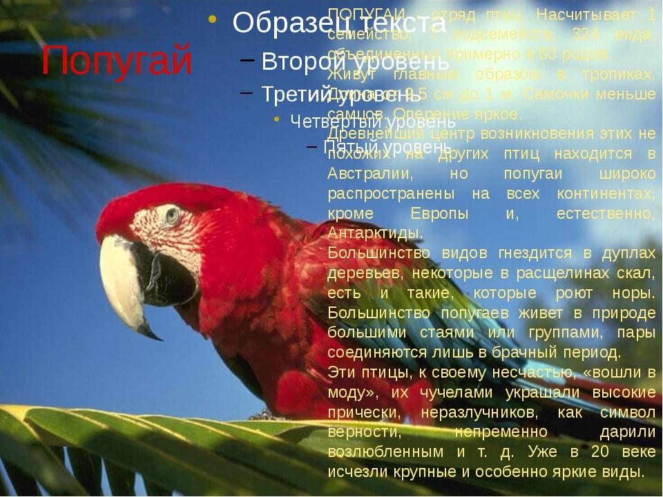 Попугай ПОПУГАИ - отряд птиц. Насчитывает 1 семейство, 7 подсемейств, 324 вид...