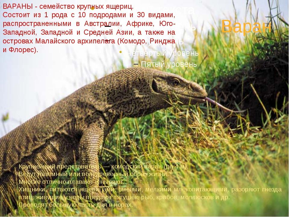 Варан ВАРАНЫ - семейство крупных ящериц. Состоит из 1 рода с 10 подродами и 3...