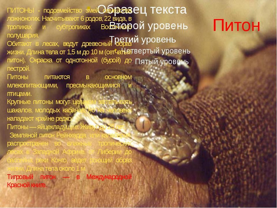 Питон ПИТОНЫ - подсемейство змей семейства ложноногих. Насчитывают 6 родов, 2...