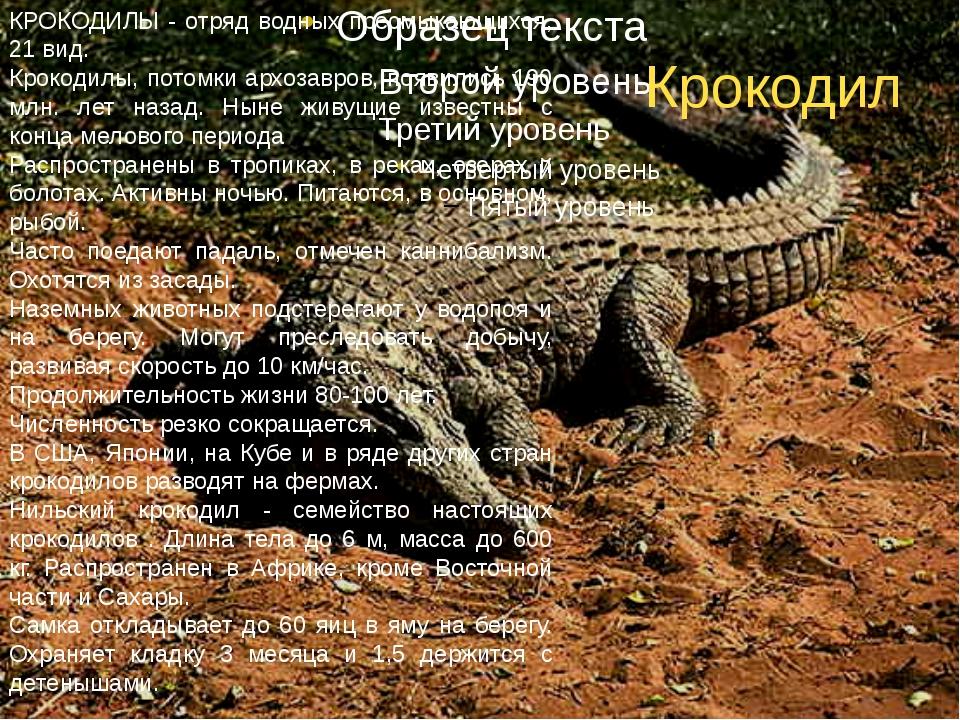 Крокодил КРОКОДИЛЫ - отряд водных пресмыкающихся, 21 вид. Крокодилы, потомки...