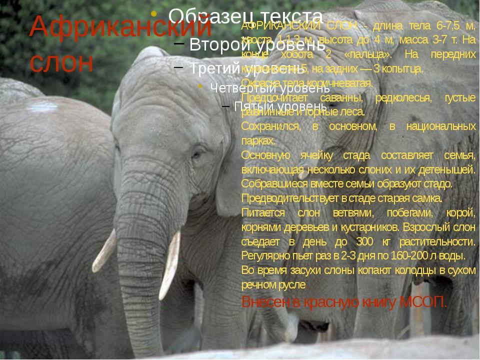 Африканский слон АФРИКАНСКИЙ СЛОН - длина тела 6-7,5 м, хвоста 1-1,3 м, высот...
