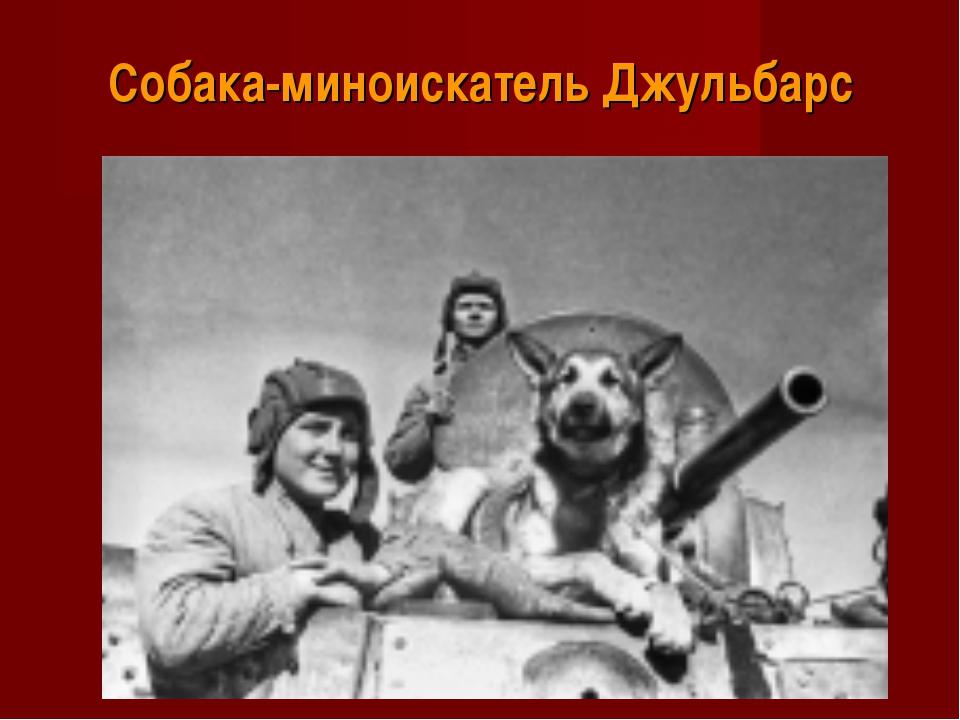 Собака-миноискатель Джульбарс
