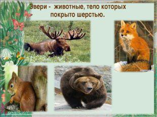 Звери - животные, тело которых покрыто шерстью.