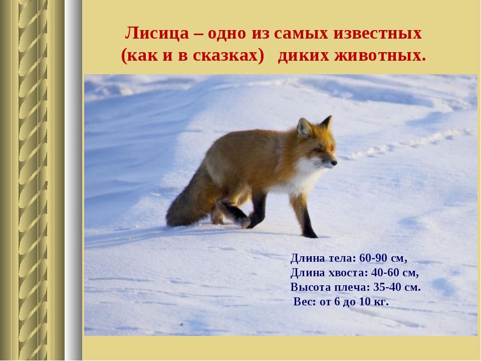 Лисица – одно из самых известных (как и в сказках) диких животных. Длина тела...