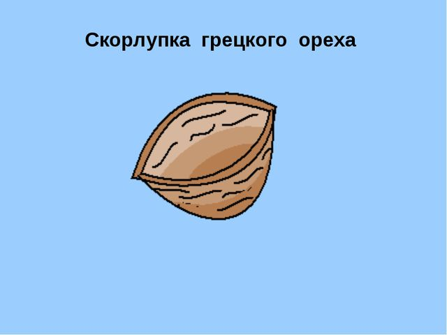 Скорлупка грецкого ореха Дюймовочке Сказка «Дюймовочка»