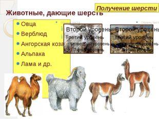 Животные, дающие шерсть Овца Верблюд Ангорская коза Альпака Лама и др. Получе