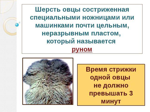 Шерсть овцы состриженная специальными ножницами или машинками почти цельным,...
